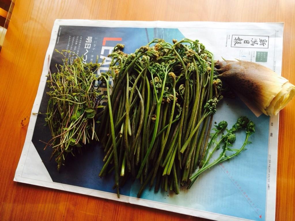BT 新潟山菜ツアー_2788