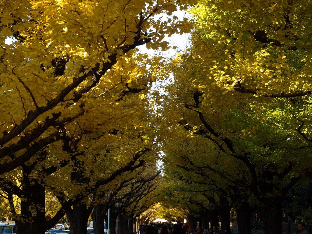 9月1日預計葉子還是綠色的